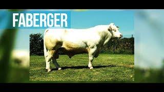 FABERGER - De la croissance et du muscle