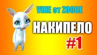 Накипело #1 Сборка вайнов #vine от #ZOOBE Зайки Домашней Хозяйки видео приколы
