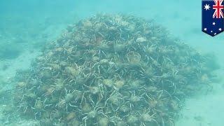Удивительный подводный мир: тысячи крабов строят секс-пирамиду