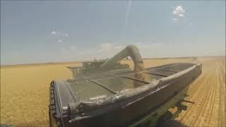Wheat Harvest 2013-Chappell, Nebraska