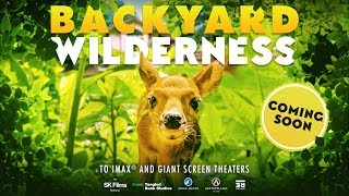 Backyard Wilderness - IMAX Sound