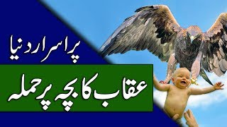 Eagle Attack Videos - Mysterious Birds - Urdu Documentary - Purisrar Dunya