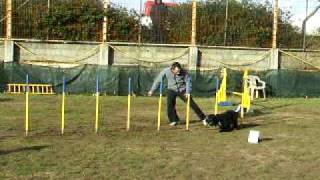 Cocker Trantor - Agility Tires 14/12/2008