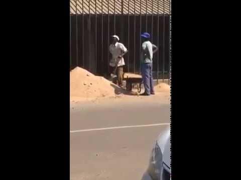 Los obreros más vagos del mundo
