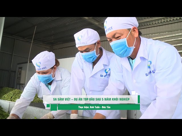 Sa sâm Việt – Dự án top đầu sau 5 năm khởi nghiệp