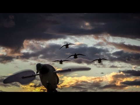 Dry Field Duck Hunting: Five-Man Limit in 25 Minutes