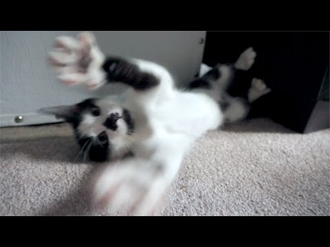 The Most Annoying Kitten in the World!