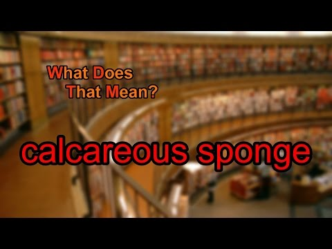 What does calcareous sponge mean?
