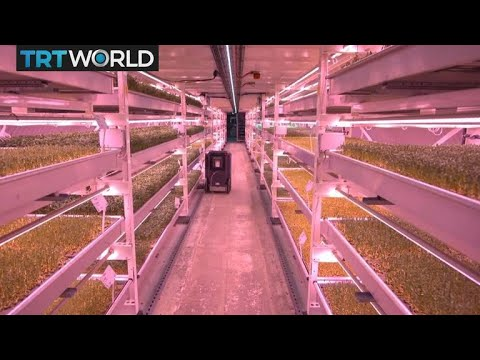 Urban Farming: Micro-farms Taking Root In London's Underground