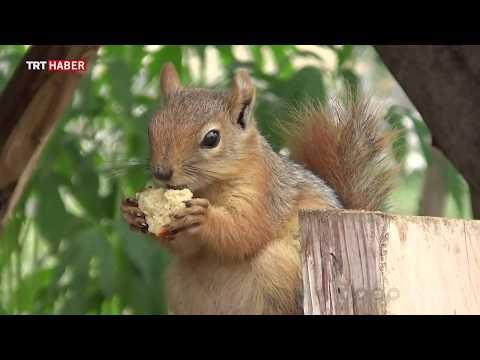 Ormanda buldukları sincap yavrusu ailenin yeni üyesi oldu