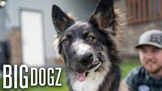 Brodie The 'Wonky Faced' Dog Proves It's Okay To Be Different | BIG DOGZ