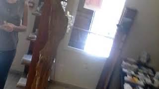TANDJA TCHAPNGA I vous montres l'office du tourisme de guyane francaise et les marionettes ...