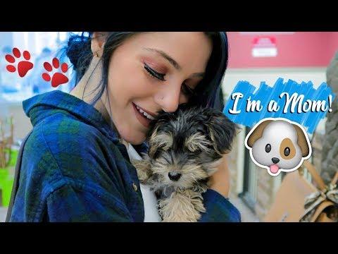 I got a puppy & I kept him a secret.. (NOT FAKE) Vlogmas Day 20! Niki DeMar