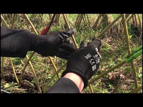 Плетение забора из ивы своими руками видео