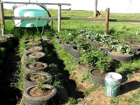 Tire garden four weeks after planting youtube for How to make a tire garden