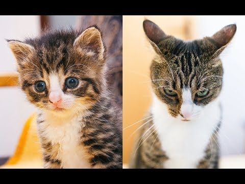Kitten to Cat - Cute Compilation - part 2