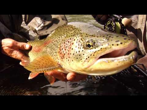 Award Winning Fly Fishing Video: Stream Of Consciousness