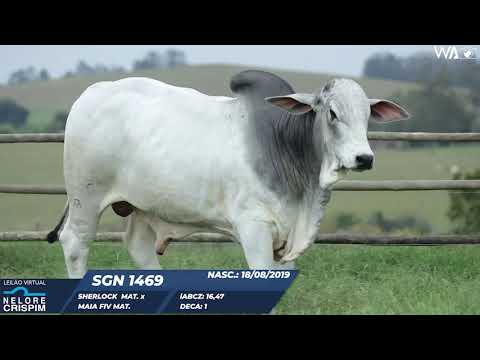 LOTE 09 SGN 1469