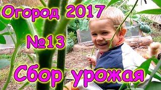 Огород 2017г. - сбор урожая, конец сезона. (09.17г.) Семья Бровченко.