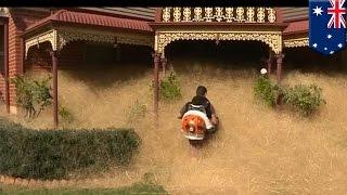 Pequeño pueblo en Australia esta sumergido en toneladas de maleza