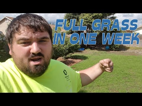 FULL YARD OF GRASS IN ONE WEEK | ARIZONA | GROWING BERMUDA G