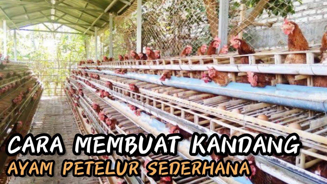 CARA MEMBUAT KANDANG AYAM PETELUR HEMAT DAN EFISIEN. - YouTube