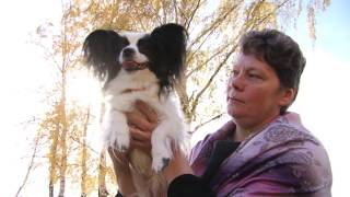 В Верхней Салде разводят собак-«бабочек»