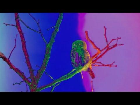 Dungen — Achmed flyger