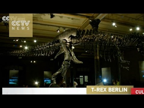 Berlin museum displays original T-Rex skeleton