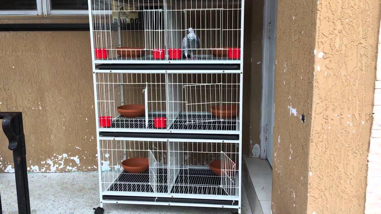 Jaulas para palomas de razas youtube for Jaulas para cria de peces