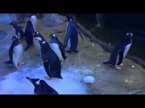 Detroit Zoo | Educational Lesson: All About Penguins