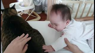 우유(고양이, 9세)와 두유(아기, 1세)가 처음 만난…