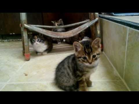 cute kittens meowing because mom is not there