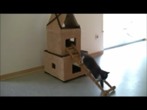 how to make a cardboard house for cats katzenhaus aus kartons i diy youtube. Black Bedroom Furniture Sets. Home Design Ideas