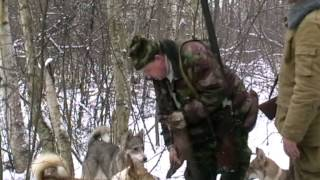 Охота на белку в Сибири