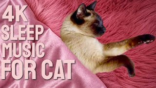 4K Sleeping Siamese Cat with Relaxing Piano Music