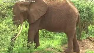 Сафари в Танзании Часть 1