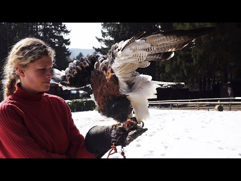 Flugshow Greifvögel Superzeitlupe – Wildgehege Hellenthal 4k