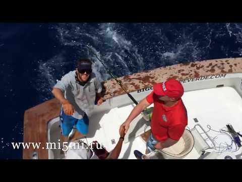 Марлин атаковал катер с рыбаками, но благодаря опытному шкиперу обошлось без экстрима...