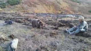 Самый добрый медведь в мире(, 2016-12-09T15:30:44.000Z)