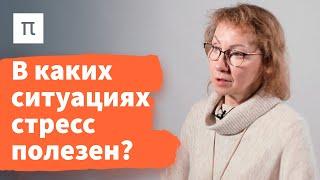 Фазы общего адаптационного синдрома — Анна Усенко / ПостНаука