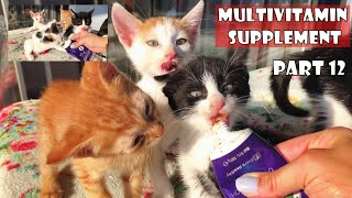 Falta la madre de los gatitos. Debo ser su madre. Parte 12: gatitos bebés ASMR