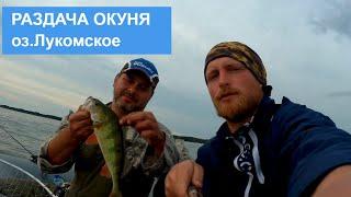 Рыбалка Окуневое эльдорадо Озеро Лукомское