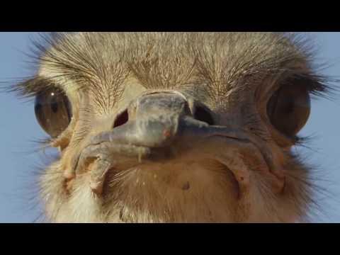 10 Милых Птиц, Которые Могут Убить Тебя