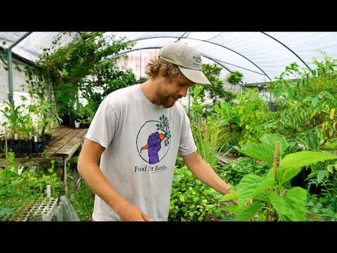 He's Introducing NEW Rare Edible Plants to Florida (& Beyond)!