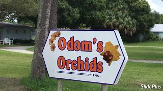 Odoms Orchid Haul
