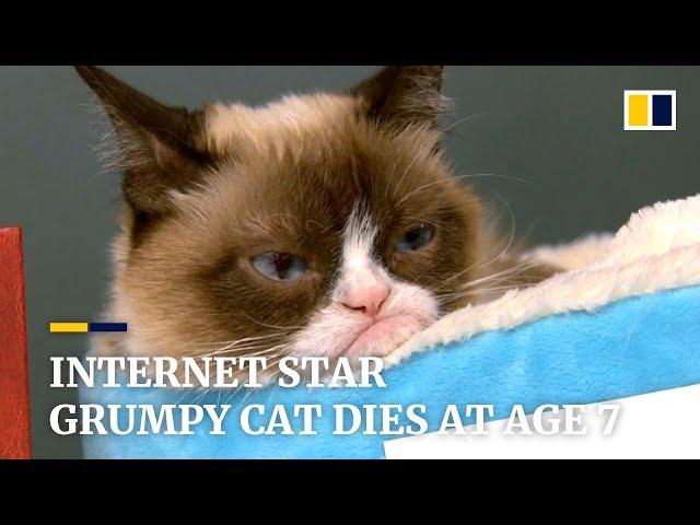 Internet star Grumpy Cat dies at age 7