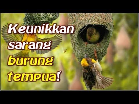 Tazkirah jalanan : Sarang burung tempua