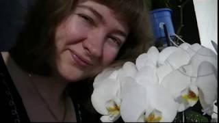ВЛОГ Покупки, обновки детям, мои книги, орхидеи!