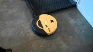 Dogs And Robotic Vacuums | Redeeming Dogs | Dfw Dog Training